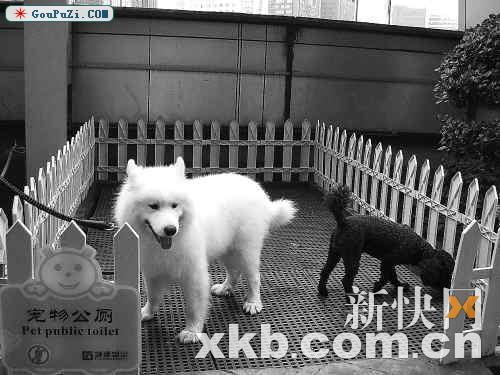 首个宠物专用公厕现身冼村