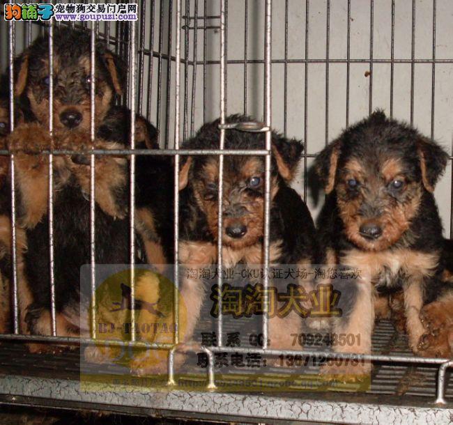 只要对狗狗好就可以价格不是问题