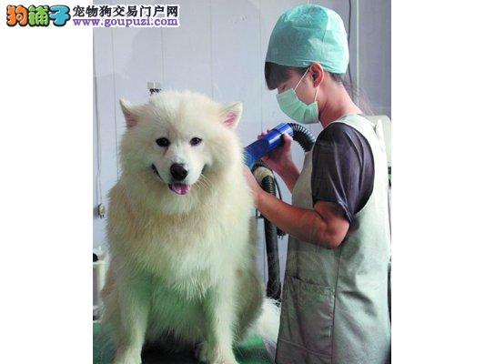 宠物狗也能享受精油、美甲等全方位服务