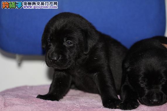 qq纯黑色动物头像