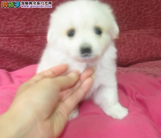 重庆什么地方有最小最便宜狗