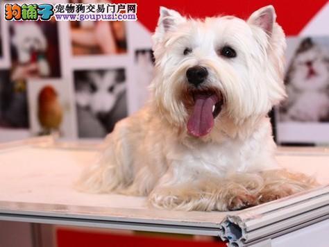 我是爱狗人士丶我为{精品西高地}代言丶服务不卑不亢