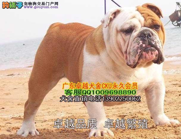 广州哪有卖狗地方广州哪里有出售斗牛犬一只多
