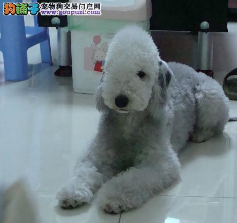 食疗法可以治疗宠物狗肠道疾病5