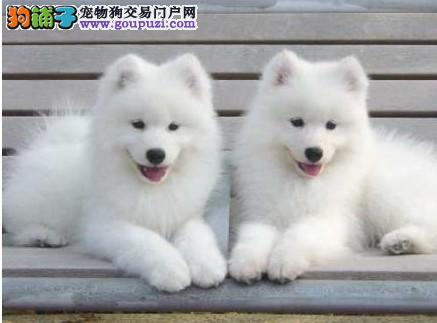 萨摩耶犬的标准体重具体是多少5