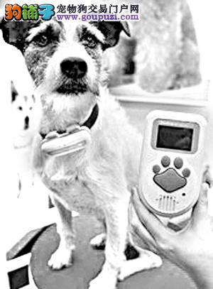 狗语翻译器真的能读懂狗狗的心么