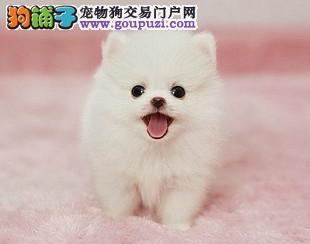 南京哪里有狗场卖长不大狗狗南京哪里宠物店卖茶杯犬