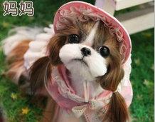 热卖西施犬宝宝 国际血统品质保障 等您接它回家