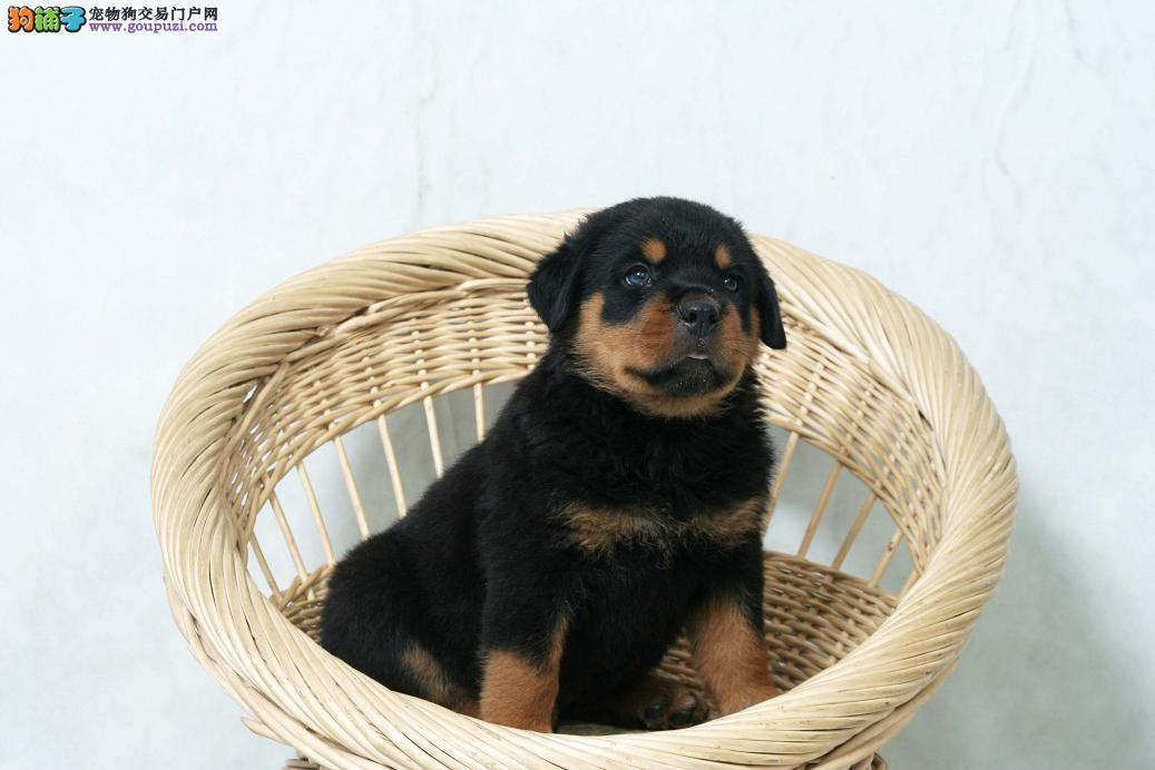 罗威纳犬食用人类药物需要谨慎哪些药物