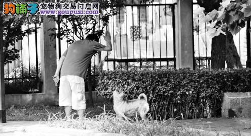 郑州出台新政策:主人主动给狗办狗证可享300元补贴