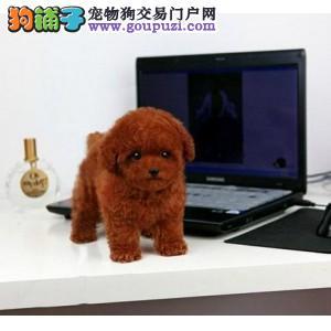 南通市出售茶杯犬幼犬 疫苗齐全 可视频看狗 上门选购2