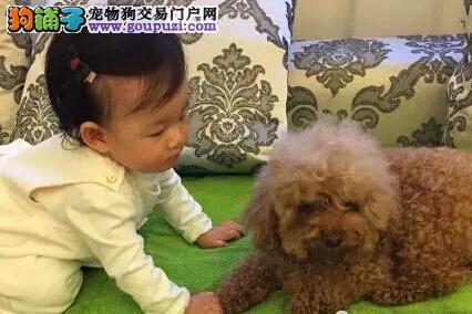 3岁宝宝养什么宠物图片