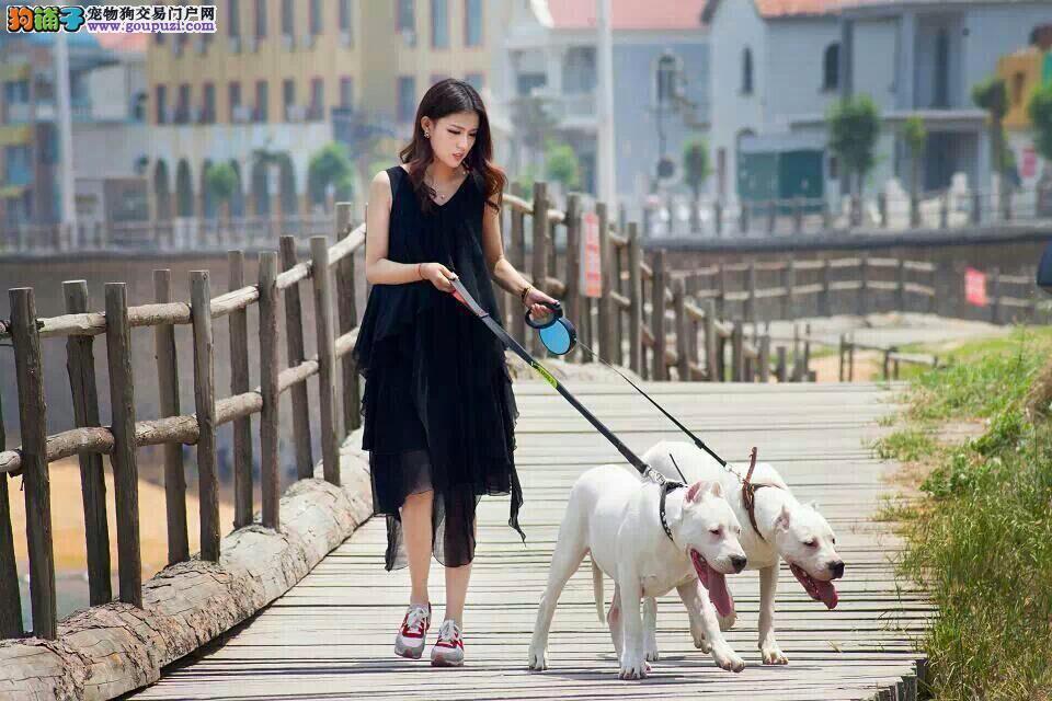 公母均有的西安杜高犬找爸爸妈妈终身售后协议