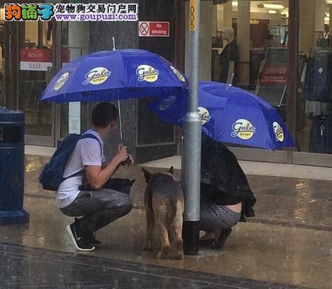 记录检疫犬检验检疫的日常工作内容5