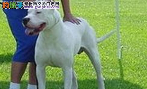 科学解答之杜高犬到底能不能吃菠菜