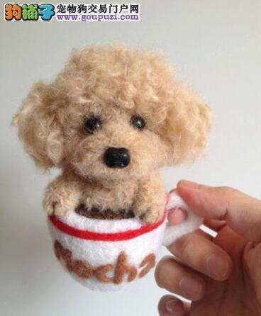 清除牙垢的好方法 适合茶杯犬使用的洁牙物品有哪些