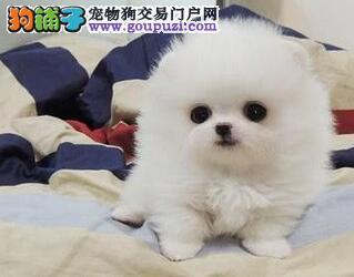 北京 圣诞狂欢 所有宠物一律六折出售、