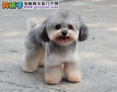 国内首个宠物狗基因检测产品正式发布