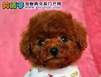 超可爱的泰迪熊宝宝热卖中