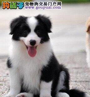 日本流行和宠物狗一起练瑜伽