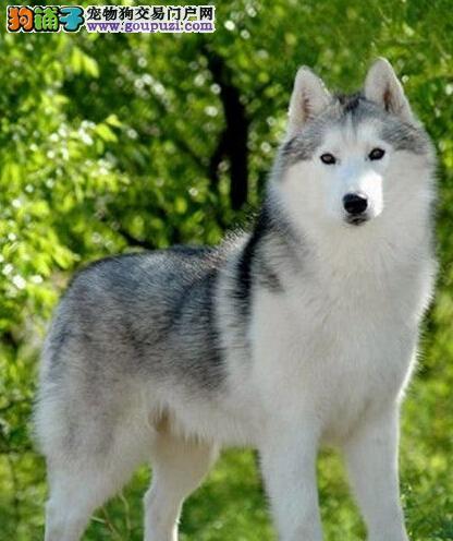 广州哪里买狗好 在广州哪里买狗比较好 哪家狗场好