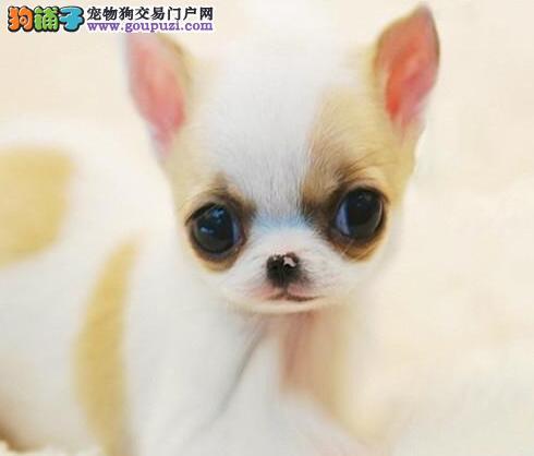 小猫头大眼睛头像可爱
