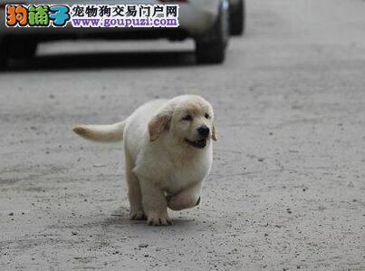 新手养狗需要有哪些准备?---养狗教练