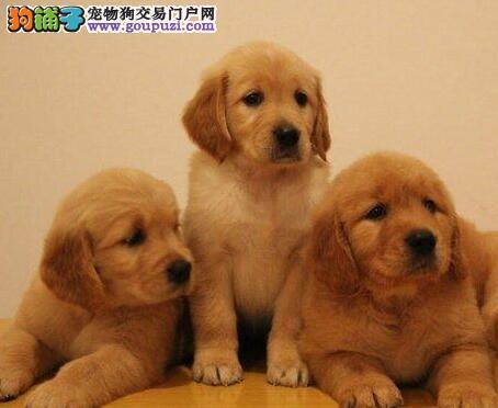 如何训练狗狗咬和吐?