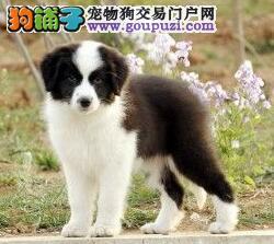训狗要知:狗狗的社交本能与训练