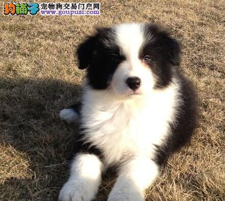 上海智商高活泼聪明的边境宝宝等您挑选品质好保健康