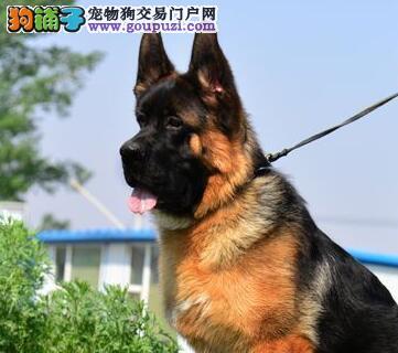 北京养殖场转让德国牧羊犬疫苗已注射签协议2