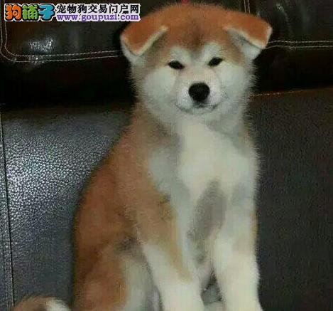 我家秋田犬这两天便便是黑色的什么原因