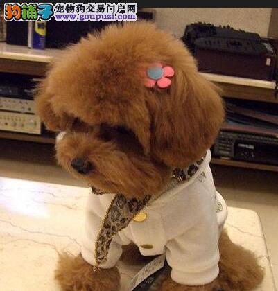 教你如何给泰迪熊美容美发 一起美美哒