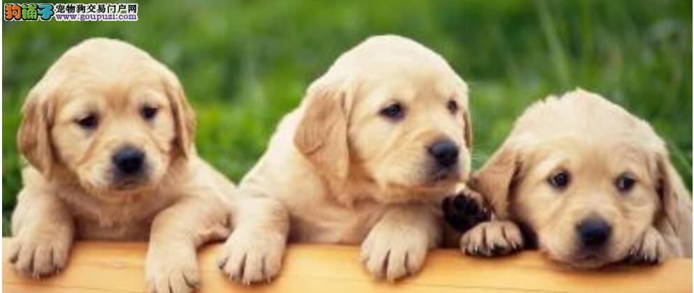 选择理想的狗狗 非常重要