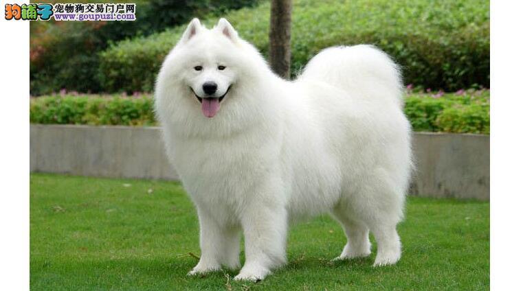 选择狗品种的四个基本原则