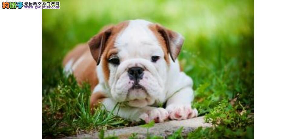 爱犬犯错误预防胜于纠正