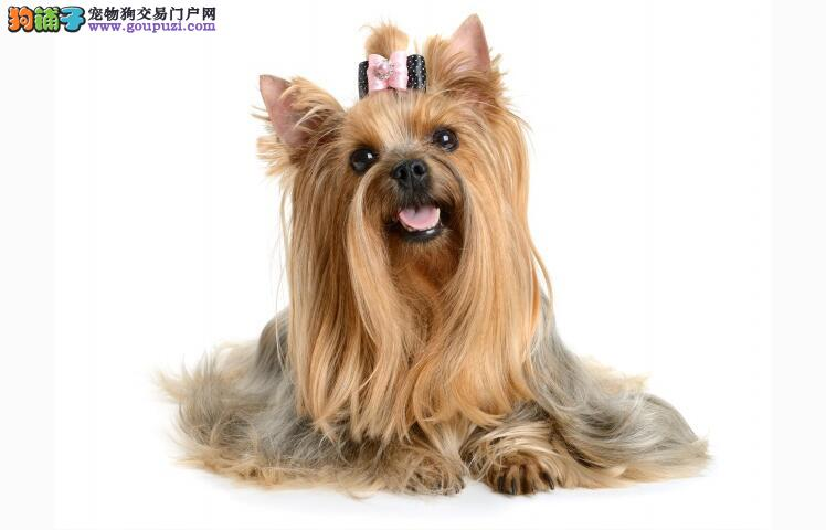 了解犬种类型 总有一种犬适合你