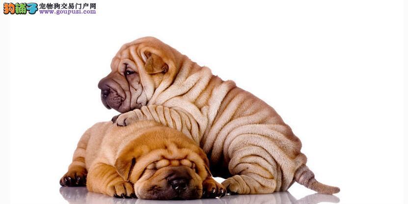 正确面对沙皮狗脂肪瘤 3招守住健康