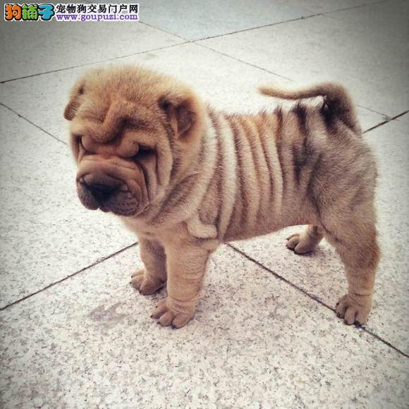 广州那里有正规狗场 广州那里有卖宠物狗