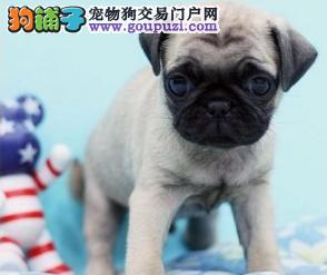 性情快乐、忧愁、活泼带有平和表情的狗狗巴嗨的起来表情包图片