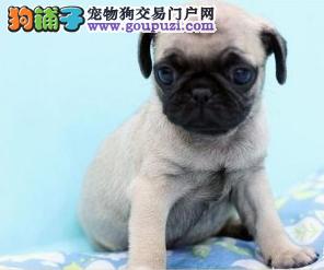 大全忧愁、快乐、活泼带有平和表情的狗狗巴qq性情斗图动态包表情图片
