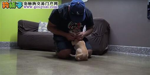 晶片帮狗狗找到回家的路 重逢主人狂摇尾巴超感人