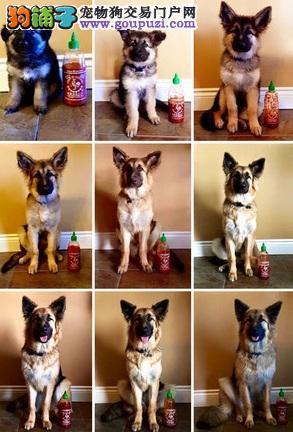 你的成长过程一点都不想错过!用瓶子帮狗狗纪录身高5