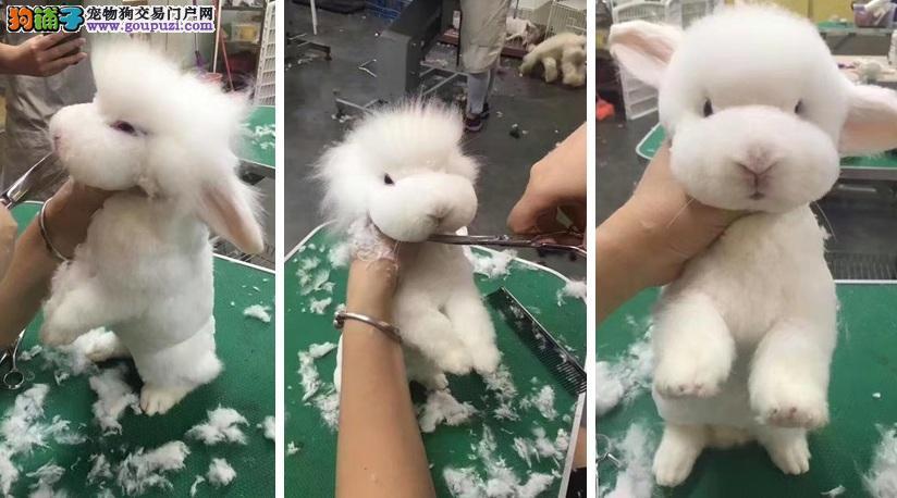 剪毛大变身!兔子、狗狗、绵羊傻傻分不清