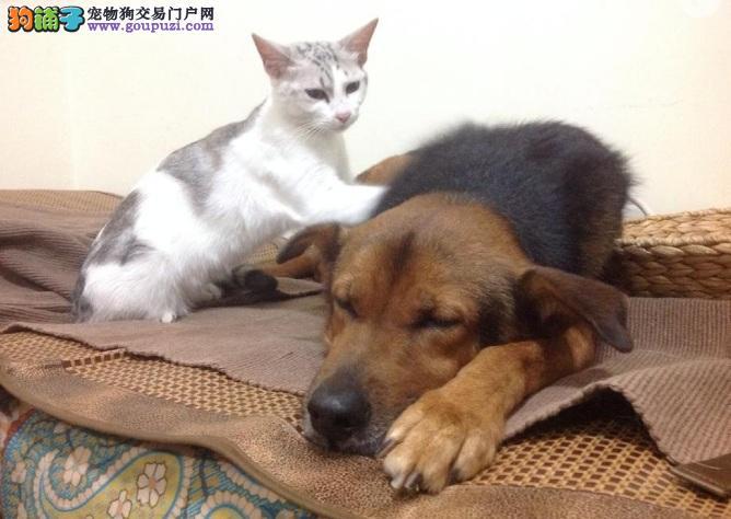 提起宠物,为何总是先想起猫猫狗狗?
