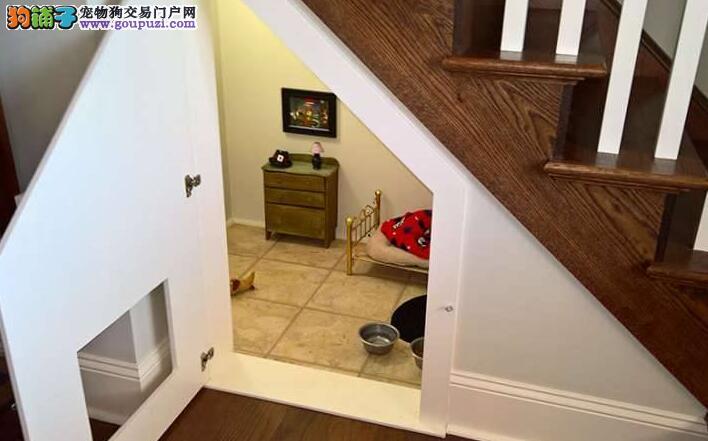 超有爱奶茶为卧室把楼梯间变成「狗爱犬」主人黑板报v奶茶图片素材图片