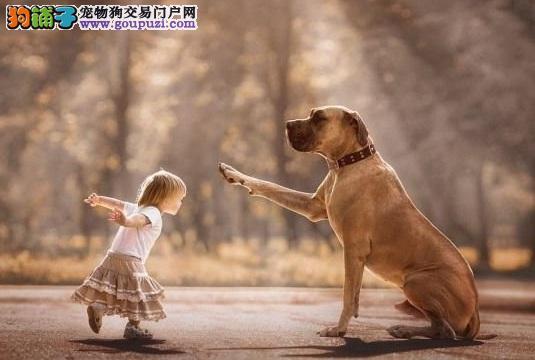 大狗和小孩有爱互动,流露满满爱意
