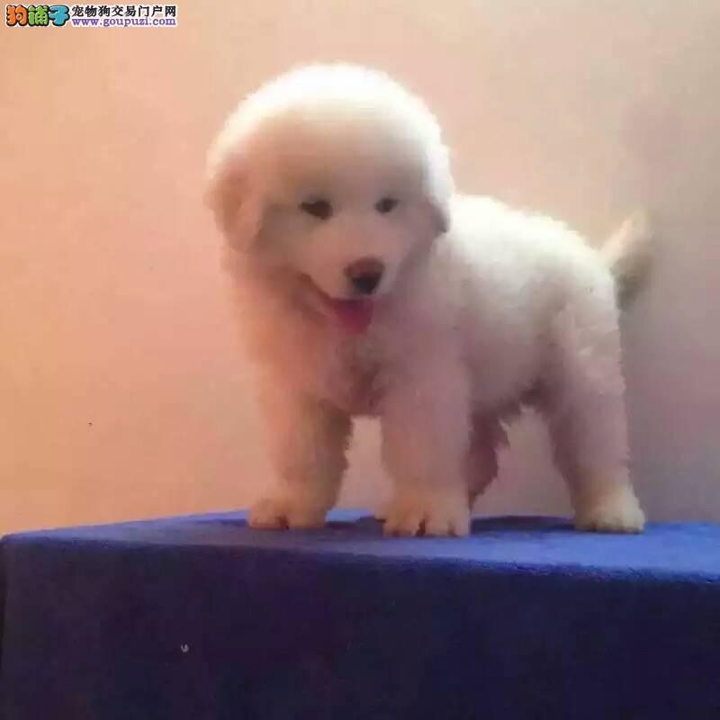 超级萌物白熊, 可爱至极 ,包养活,健康