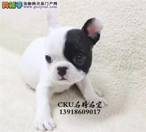 广东法牛可爱螺旋尾全国包运全国发货
