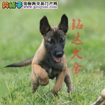 北京正规马犬繁殖基地、品质保障、可全国办理托运2